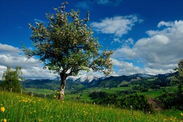 Oberstaufen-Frühlingserwachen